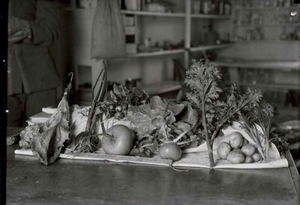 Food Studies Reading Group: Visceral Politics, Vital Materialism, and Food Politics!