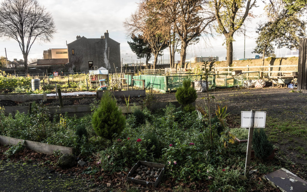 Dublin's Food Growing Scene: Are Community Gardens a Solution in our COVID-19 Future?